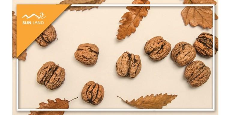 Грецкий орех и его влияние на наш организм