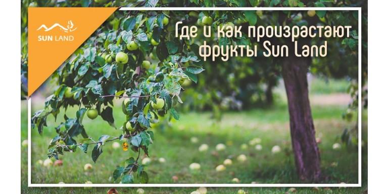 Солнце и природа Армении: где и как произрастают фрукты Sun Land