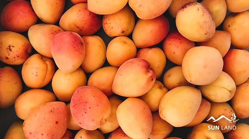 фрукты углеводы